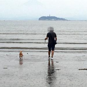 久しぶりの海散歩♪