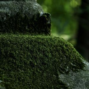 171歩 緑のミクロの森を探検 編