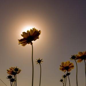 172歩 太陽を背景に 編