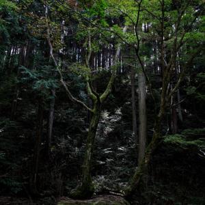 522歩 自然の美しさは、何でこんなに 編