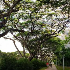 タイから来て感じるシンガポール singapore impressions post-thailand