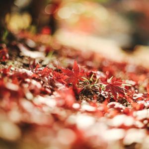 乾燥と戦う季節