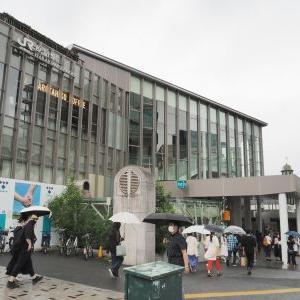【都心】明治神宮の花菖蒲