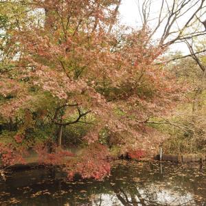 【都心】目黒の大鳥神社&国立科学博物館附属 自然教育園