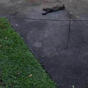今日のサボの介~猫に会いに行ってきたの巻~