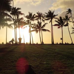 ペレと一緒にハワイに行こう!プロジェクト