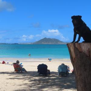 犬とハワイ:手続きのサービス&ペレの場合