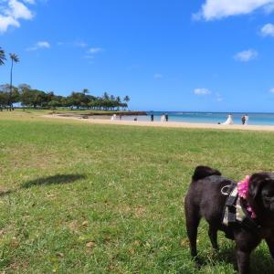 ハワイのビーチで泳いだりマッタリしたよ  [動画あり]