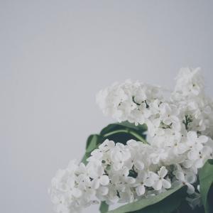 なぜ起こってしまったのか・・京都アニメーションの放火事件【死傷者多数】