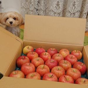 りんごリンゴ~