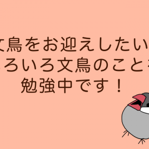 【文鳥】ペットとして初心者でも育てやすそうな文鳥を飼いたい!