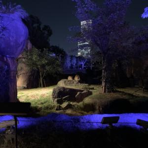 【天王寺動物園】ナイトZOOに行って来たよ!夜のライオンかっこいい!