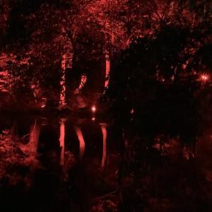 チームラボ光の祭栗林公園が今アツイ