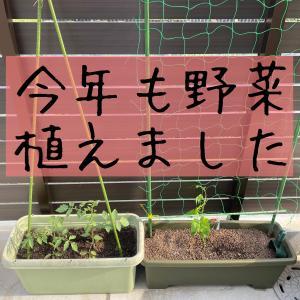 今年も野菜植えました*プチトマト&ゴーヤ(緑のカーテン)