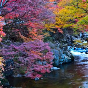 神越渓谷の多色モミジが綺麗