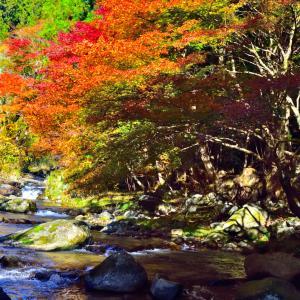 保殿の滝紅葉