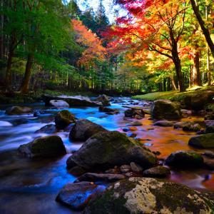 新城巴川の紅葉