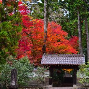 雲興寺の早朝紅葉