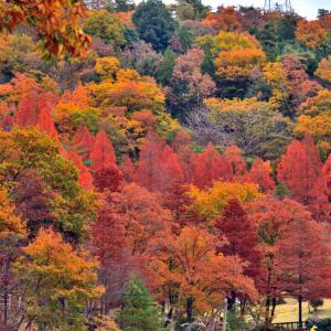 みたけの森の紅葉 お勧めの穴場