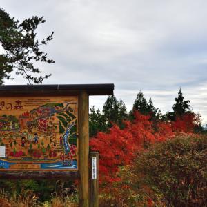 めい想の森 メタセイコイアの紅葉
