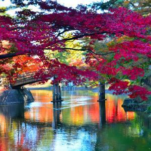 岡崎東公園の紅葉