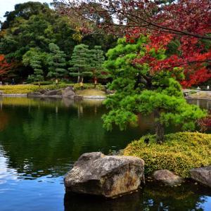 徳川園 今年の紅葉は