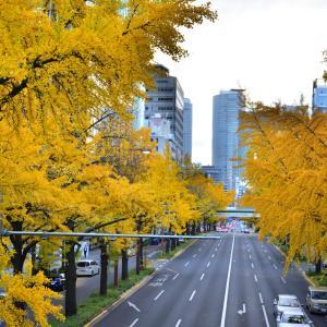 桜通、若宮大通の黄葉