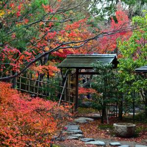 白鳥庭園の紅葉・雪吊りライトアップ