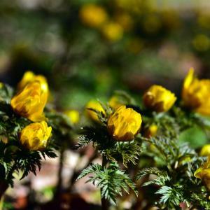 名古屋市農業センター 春の花たち