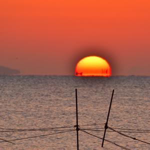 知多のダルマ朝陽