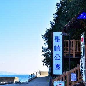 聖崎公園 河津桜×メジロ