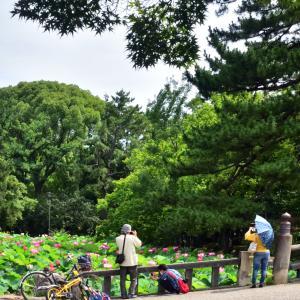 鶴舞公園の蓮池