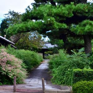 円光寺の萩