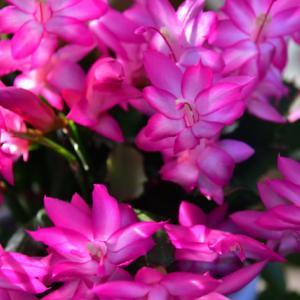 名古屋市農業センター、季節の花