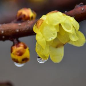 雨続き、濡れた花木
