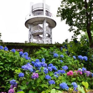 小牧「市民四季の森」の紫陽花