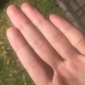 【制汗剤フレナーラ】手汗がひどい女が1年使った体験談口コミ!効果あり?最安値は?