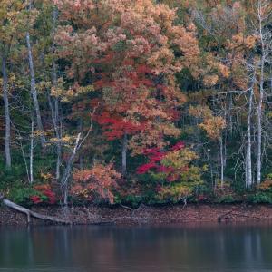 池の畔の秋 / The banks of the pond in Autumn