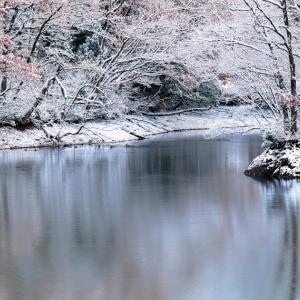 池の畔に冬来る / Winter is here