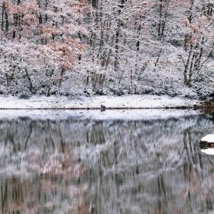 水辺の雪帽子 / A snow hat at waterside