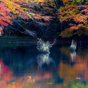 水面に映す錦秋 / Reflection of Autumn scenery