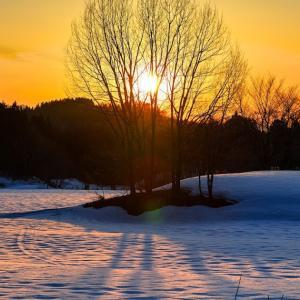 黄昏時の木立 / Trees at sunset