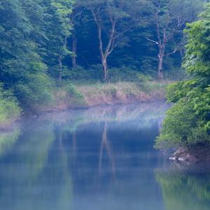 朝靄の森 / Forest in the morning mist