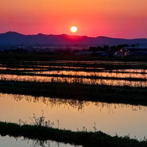 夕陽と水田 / Sunset and paddy fields
