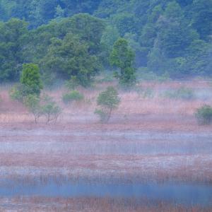 朝霧の湿地帯 / Wetlands in the morning fog