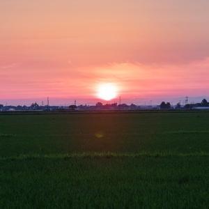 田んぼの夕陽 / Sunset over a paddy field