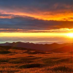 金色の野 / The Golden Fields