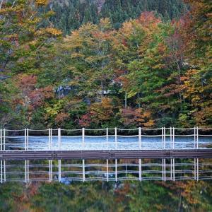 紅葉の浮橋 / Floating bridge in autumn leaves