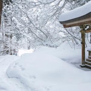 雪の参道を往く / Snowy approach
