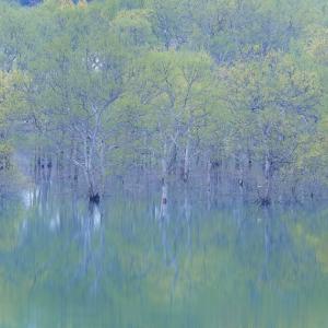 静水の景 / Tranquil Landscape
